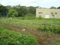 Horta agroecológica.