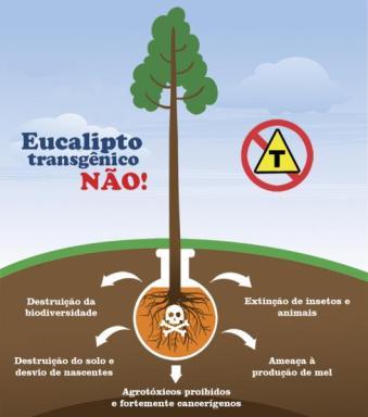 INFOGRAFICO eucalipto